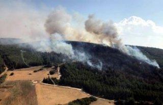 Menderes'te orman yangını