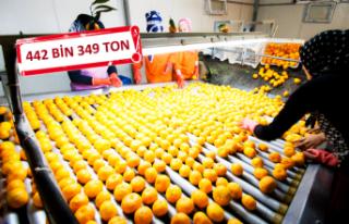 Narenciyede 900 milyon dolar ihracat hedefi