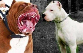 Bu köpekleri besleyenlere 7800 TL ceza