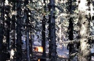Simav'da alevler 8 hektar çam ormanına zarar...