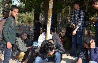 Kaçak göçmenleri, 'İstanbul' diye Batman'da...