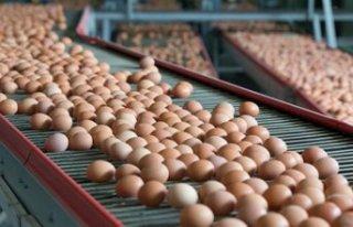 Yumurta ihracatçılarından ABD hamlesi
