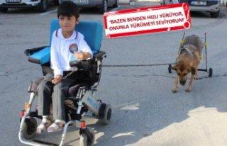 Yürüteçli köpeğe bedensel engelli Mustafa, en...