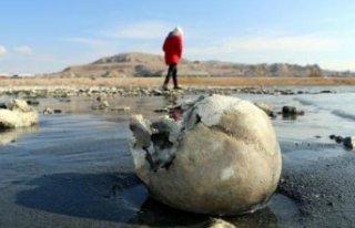 Van Gölü çekilince korkunç görüntü ortaya çıktı