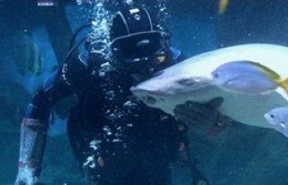 Köpekbalığı İle Dans