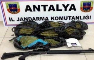 Alanya'da 12 Kilo Esrar, 3 Gözaltı