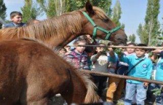 Ana Sınıfı Öğrencileri At Çiftliğini Gezdi