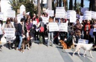 Bodrum'da Sokak Hayvanları İçin Protesto