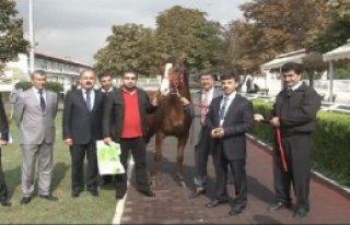 Bu Atın Fiyatı 800 Bin Lira