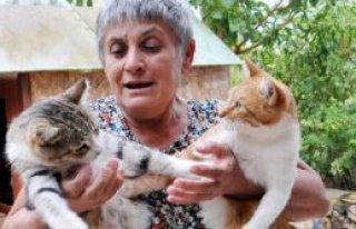 Evinde 51 Sokak Hayvanına Bakıyor