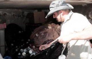 İç Sularda Balık Avına Yakın Takip
