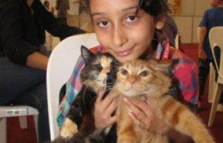 Fuarın En Güzel Kedisi 'Şiva' Oldu