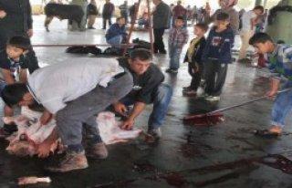 Çocukların Gözü Önünde Kurban Kesimi