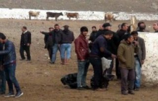 Kars'ta 15 Gün Hayvan Satılamayacak