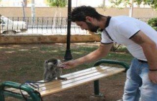 Çekirdek Yiyen Kola İçen Maymun