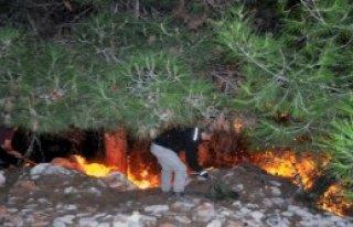 Konyaaltı'nda Sazlık Alanda Yangın