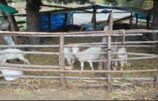 Köyde Kuduz Alarmı