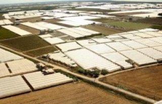 Örtü Altı Üretim Alanı Arttı