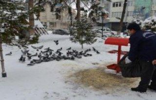 Kuşlara Belediyeden Yem Desteği