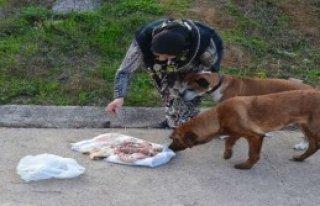 Sokak Köpeklerini Zehirlemek İstediler