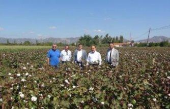 AK Parti Aydın milletvekilleri, pamuk tarlasıyla incir bahçesi gezdi