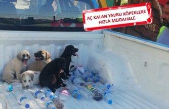 Buca'da beş yavru köpek hayata döndü