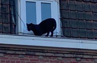 Çatı katında panter şoku!