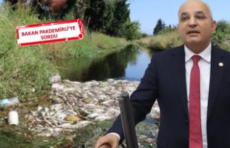 İzmir'deki balık ölümleri Meclis gündeminde