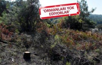 İzmir'in akciğerleri, rantçılar tarafından yok ediliyor