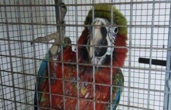 """Kaçakçılık polisinden """"Papağan"""" operasyonu"""