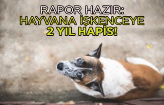 Rapor hazır: Hayvana işkenceye 2 yıl hapis!