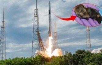 SpaceX'in süper fareleri uzay üssüne ulaştı!