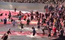 Balina avı görüntülerine resmi açıklama