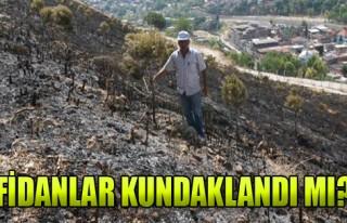 Kadifekale'de Fidanlar Kundaklandı Mı?