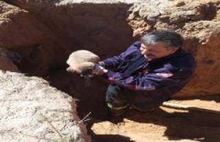 Yavru köpeği itfaiye ekibi kurtardı