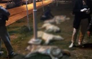 Ankara'daki köpek katliamıyla ilgili yeni gelişme
