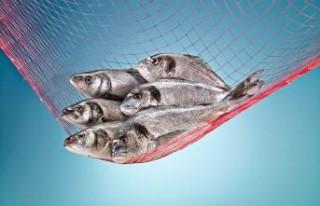 Lehlerin sofralarını Türk balıkları süsleyecek