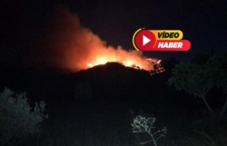 İzmir Menderes'te orman yangını!