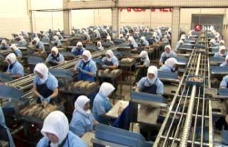 """Dardanel fabrikasındaki """"kapalı devre çalışma""""..."""