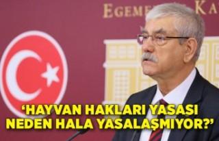 CHP'li Beko: Hayvan Hakları Yasası neden hala...