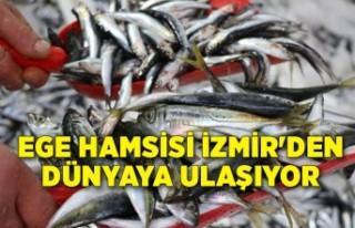Ege hamsisi İzmir'den dünyaya ulaşıyor