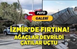 İzmir'de fırtına; ağaçlar devrildi, çatılar...