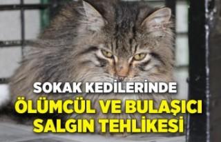 Sokak kedilerinde ölümcül ve bulaşıcı salgın...