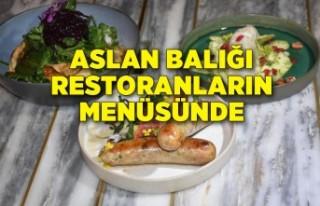 Aslan balığı restoranların menüsünde yer aldı