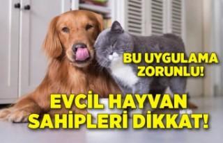 Evcil hayvan sahipleri dikkat! Pasaport ve mikroçip...