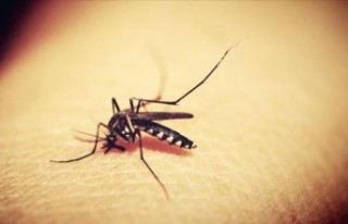Küresel ısınma yavaşlayınca sıtma yayılımı...
