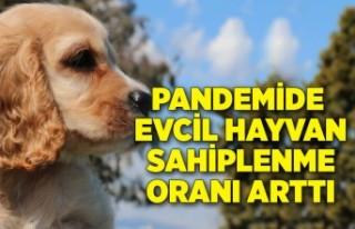 Pandemide evcil hayvan sahiplenme oranı arttı