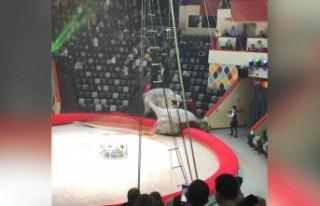 Rusya'da sirkte filler birbirine girdi