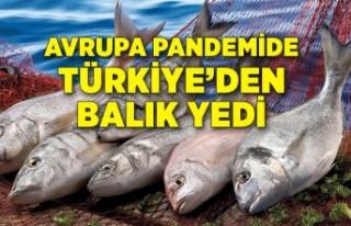 Türkiye'deki balığa Avrupa'dan talebin...