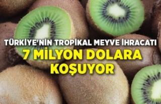 Türkiye'nin tropikal meyve ihracatı 7 milyon...